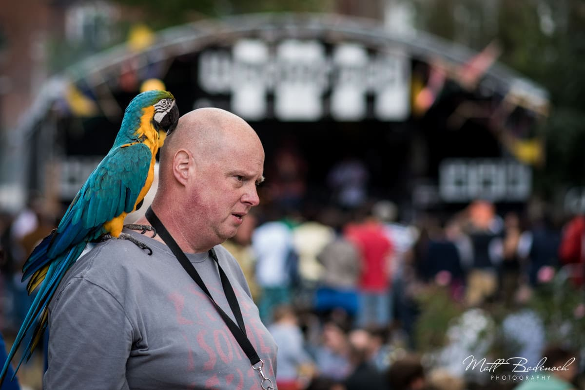 Camberwell Fair 2015 Photos