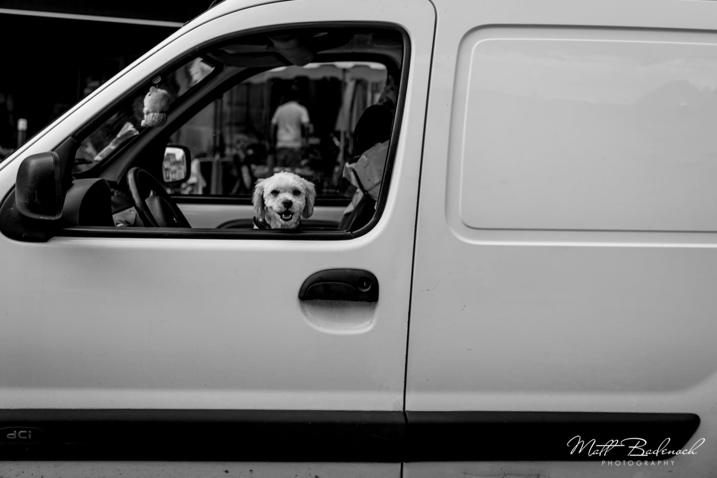 small dog in a white van | bordeaux street photography