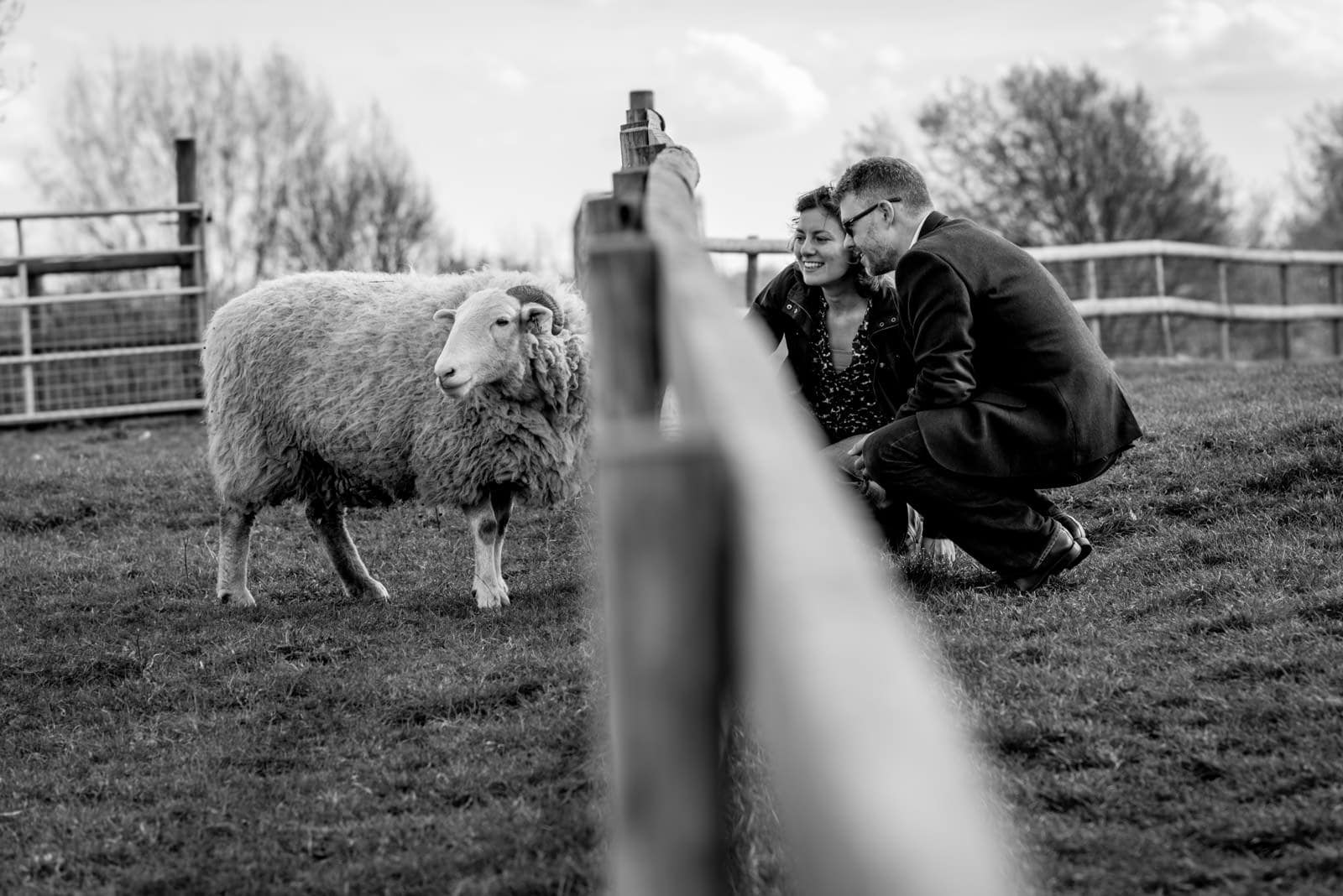 Black and white photo of couple petting a sheep during their Mudchute Farm Engagement photos