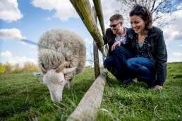 Photo of couple with sheep during their Mudchute farm engagement photos