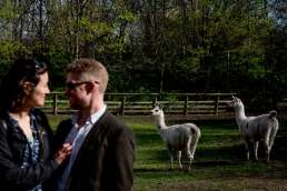 Photo of couple and Llamas during their Mudchuke Park engagement photos