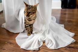 cat on brides dress at her home wedding