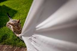 cat on brides white dress in the garden of this intimate wedding
