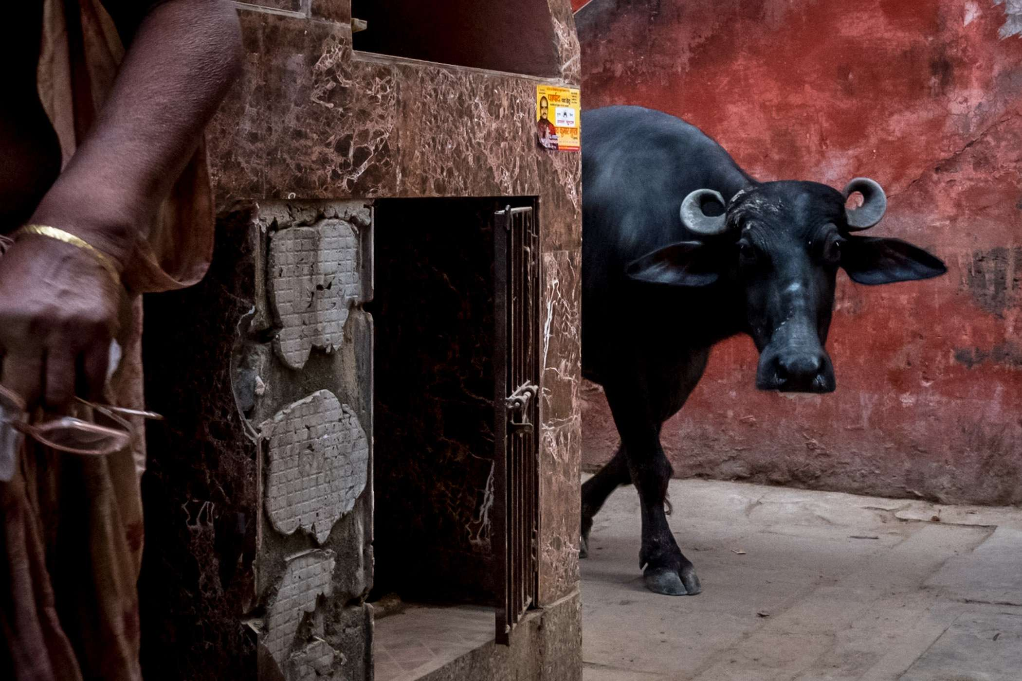 Cow coming around the corner in Varanasi on our India street photography trip
