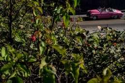 A classic pink cuban car in Havana