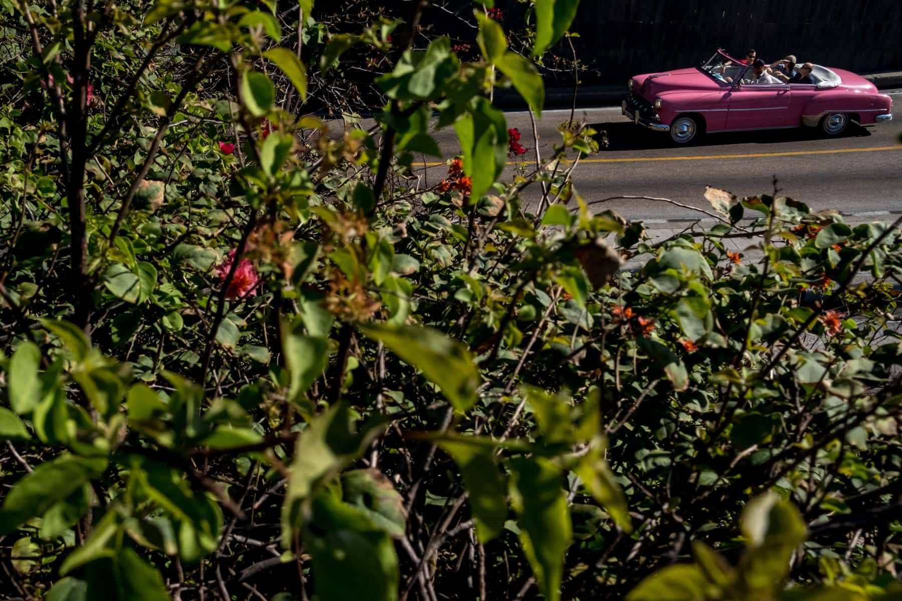 A classic pink cuban car in Havana